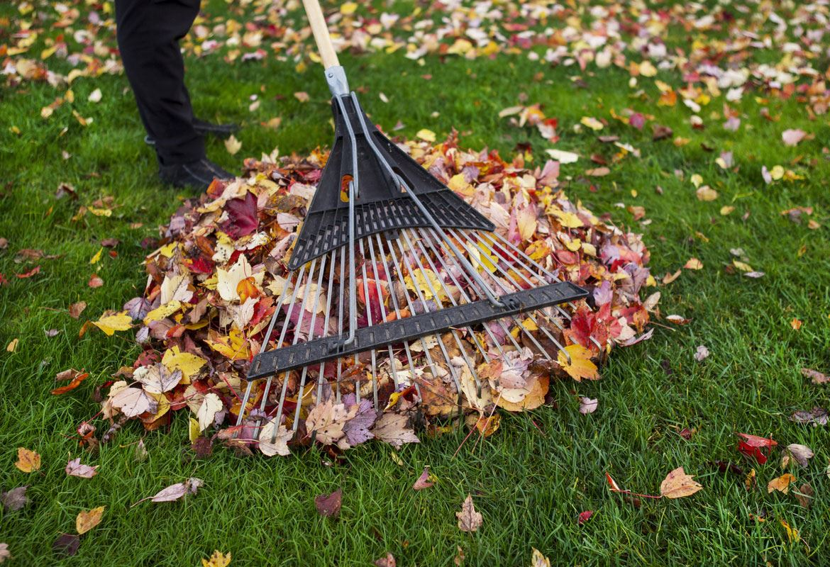 raking-leaves-leaf-pile-autumn-fall