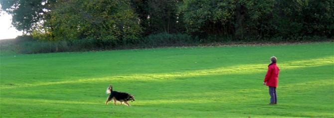 Pet and Owner on Green Grass